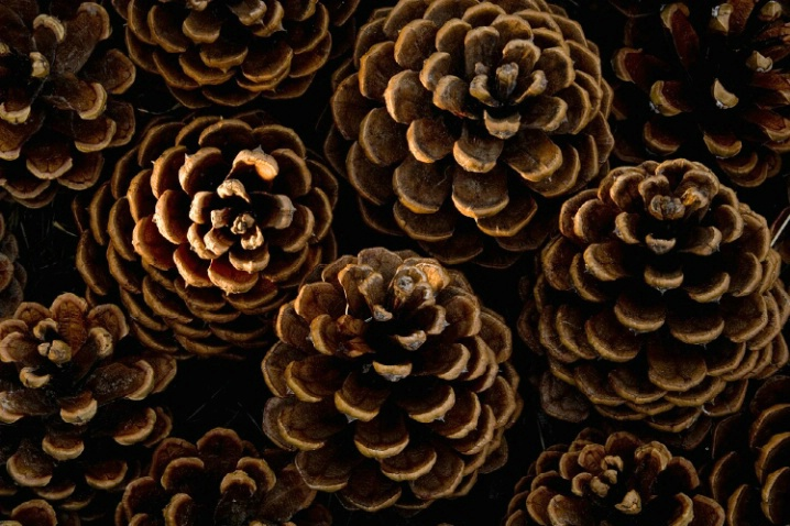 MoniRose Crochets: Pine Cone Doily